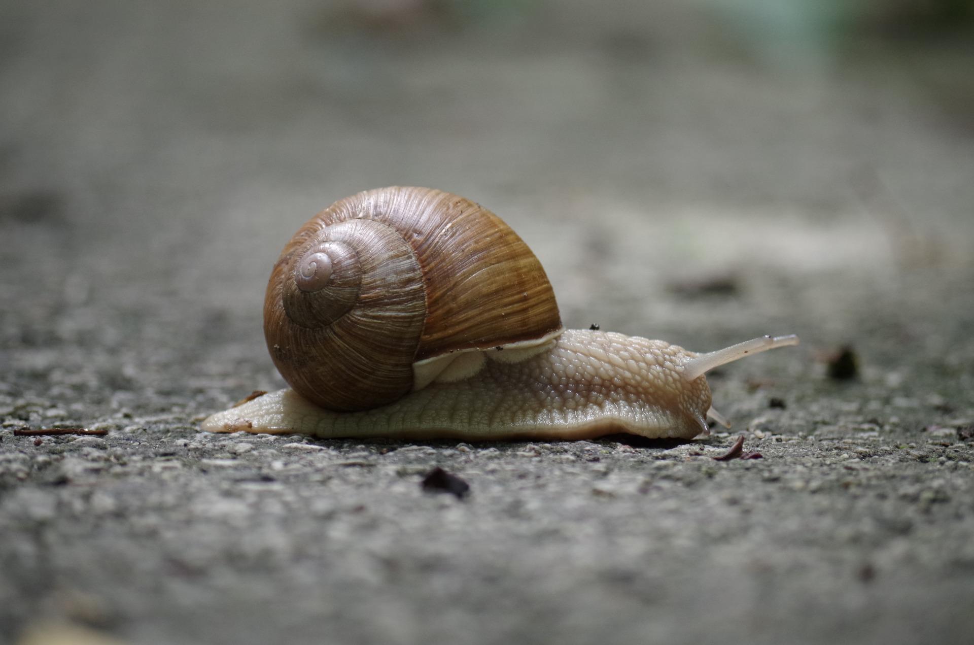 snail-1547648_1920